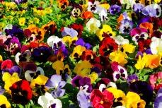 flowers-1067263_960_720