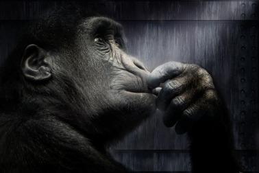 gorila-1314271_960_720
