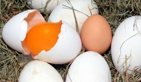 egg-1268240_960_720